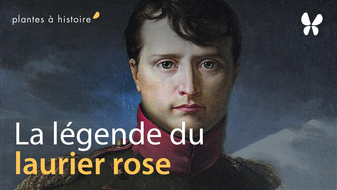 histoire du laurier rose
