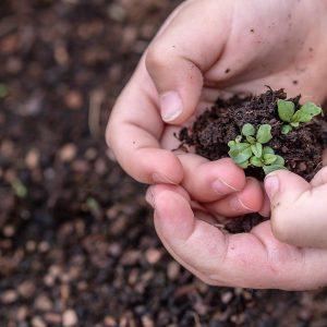 enfant qui tient dans ses mains du terreau et une plante